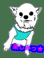 Chihuahua days sticker #5178907