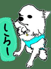 Chihuahua days sticker #5178910