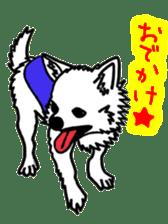 Chihuahua days sticker #5178913