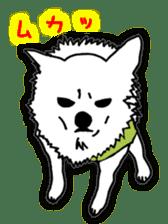 Chihuahua days sticker #5178920