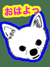 Chihuahua days sticker #5178922
