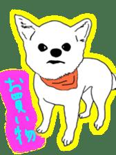 Chihuahua days sticker #5178924