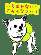 Chihuahua days sticker #5178928