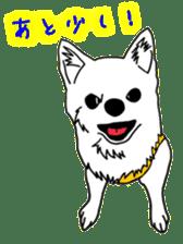 Chihuahua days sticker #5178929