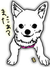 Chihuahua days sticker #5178930