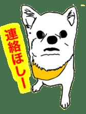 Chihuahua days sticker #5178931