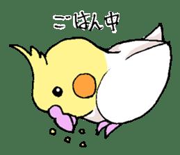 shiro parakeet sticker #5265168