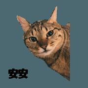 สติ๊กเกอร์ไลน์ moew cats hard life