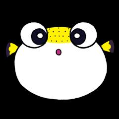 Paku the Puffer Fish