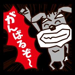 元気印!!【シュナウザー編】