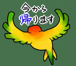 Sun Conure (birds) sticker #5550300