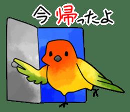 Sun Conure (birds) sticker #5550301