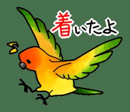 Sun Conure (birds) sticker #5550303