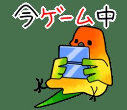 Sun Conure (birds) sticker #5550304