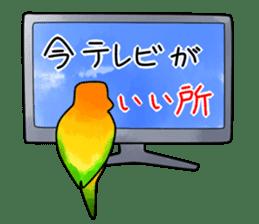 Sun Conure (birds) sticker #5550307