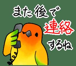 Sun Conure (birds) sticker #5550309