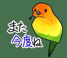 Sun Conure (birds) sticker #5550310
