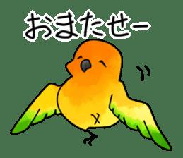 Sun Conure (birds) sticker #5550311