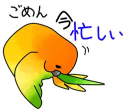 Sun Conure (birds) sticker #5550313
