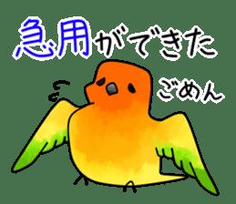 Sun Conure (birds) sticker #5550314