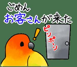 Sun Conure (birds) sticker #5550317