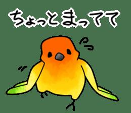 Sun Conure (birds) sticker #5550318