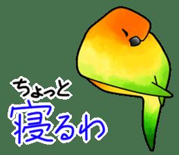 Sun Conure (birds) sticker #5550319