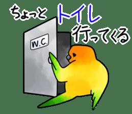 Sun Conure (birds) sticker #5550321