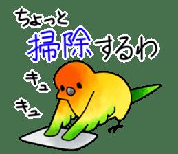 Sun Conure (birds) sticker #5550323