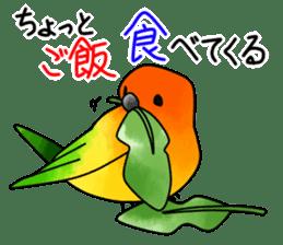 Sun Conure (birds) sticker #5550325
