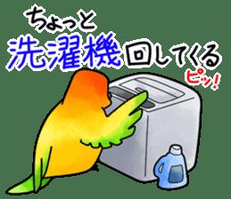 Sun Conure (birds) sticker #5550326