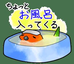 Sun Conure (birds) sticker #5550328