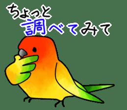 Sun Conure (birds) sticker #5550330