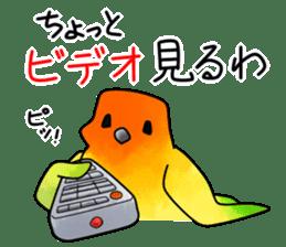 Sun Conure (birds) sticker #5550333
