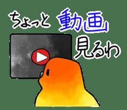 Sun Conure (birds) sticker #5550334