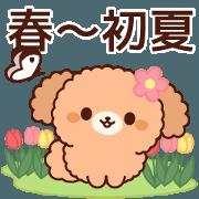 สติ๊กเกอร์ไลน์ Gentle toy poodle (spring-early summer)