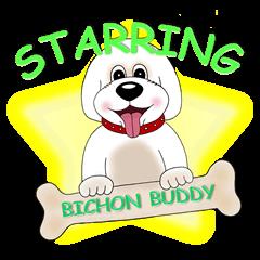 Bichon Buddy