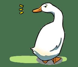 Quack Quack Duck Talk sticker #5574853