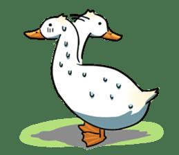 Quack Quack Duck Talk sticker #5574883