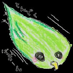 """true parrots """"boo"""""""