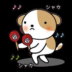 shih-tzu Yama-chan