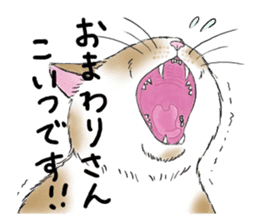 Individual cats sticker #5615893