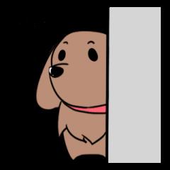 Three dachshunds