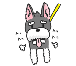 Standing Ears Schnauzer 2 sticker #5703123
