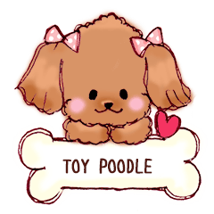 TOY POODLE English version