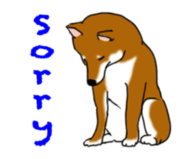 Shiba Inu Momo & his Friends in English sticker #5706397
