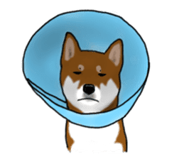 Shiba Inu Momo & his Friends in English sticker #5706403