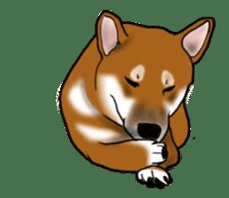 Shiba Inu Momo & his Friends in English sticker #5706407