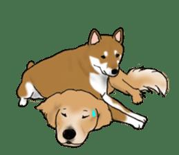 Shiba Inu Momo & his Friends in English sticker #5706427