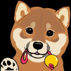 Shiba Inu, the brushwood dog from Japan